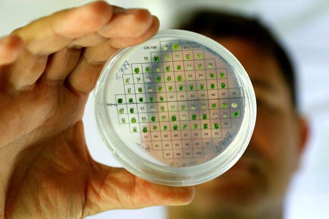 Israel nghiên cứu sản xuất điện từ thực vật